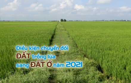 Chuyển đổi đất trồng lúa sang đất ở